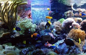 Get the right amount of fish for your aquarium and don't overstock
