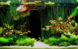 A planted aquarium is less likely to suffer from sudden ammonia poisoning
