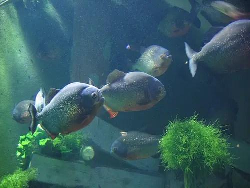 Aquarium Tricks