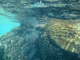 Ghost Fishing Turtle