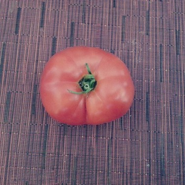 The first tomato, picked and ready to eat (yes, I am the one who ate it)!