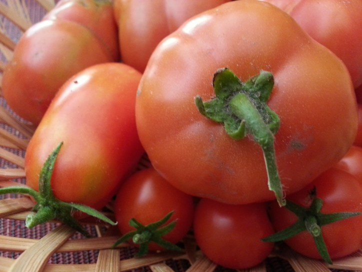 Home-grown, organic tomatoes. Photo by Leviana Coccia.