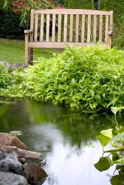 How Do You Spell Pond : spell, Spell, Aquascape,