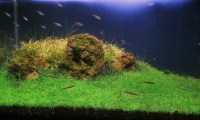 3 Best Carpet Plants for Aquascape