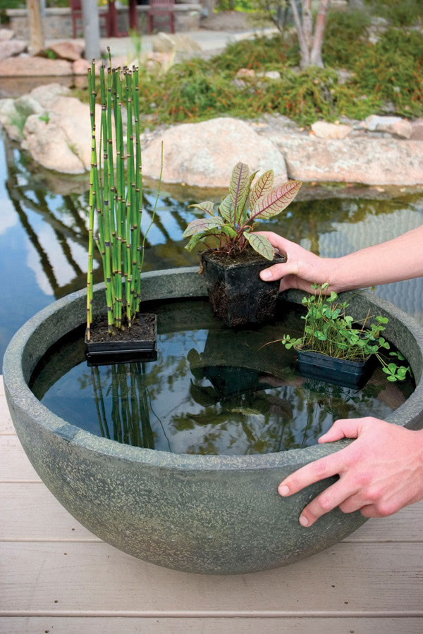 aquatic patio pond 24