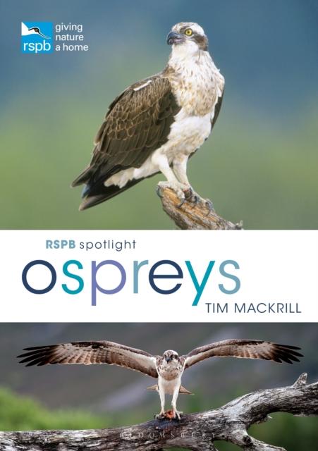 RSPB Spotlight Ospreys