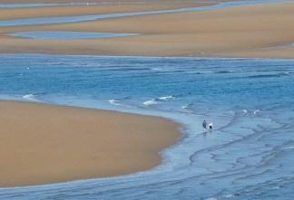 A Walk Beside the Seashore print