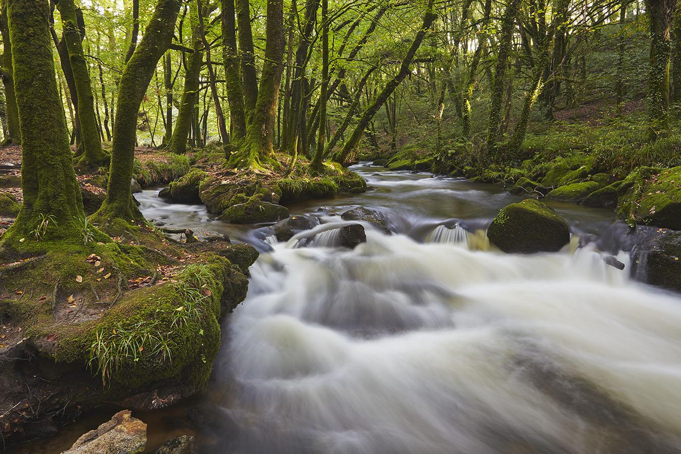 Cornish Woodland Stream print