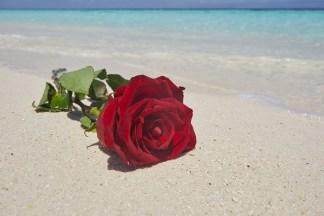 Love on a Tropical Beach print