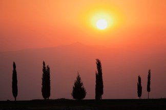Conifers at Sunset print, Warmth of a Sunset Silhouette