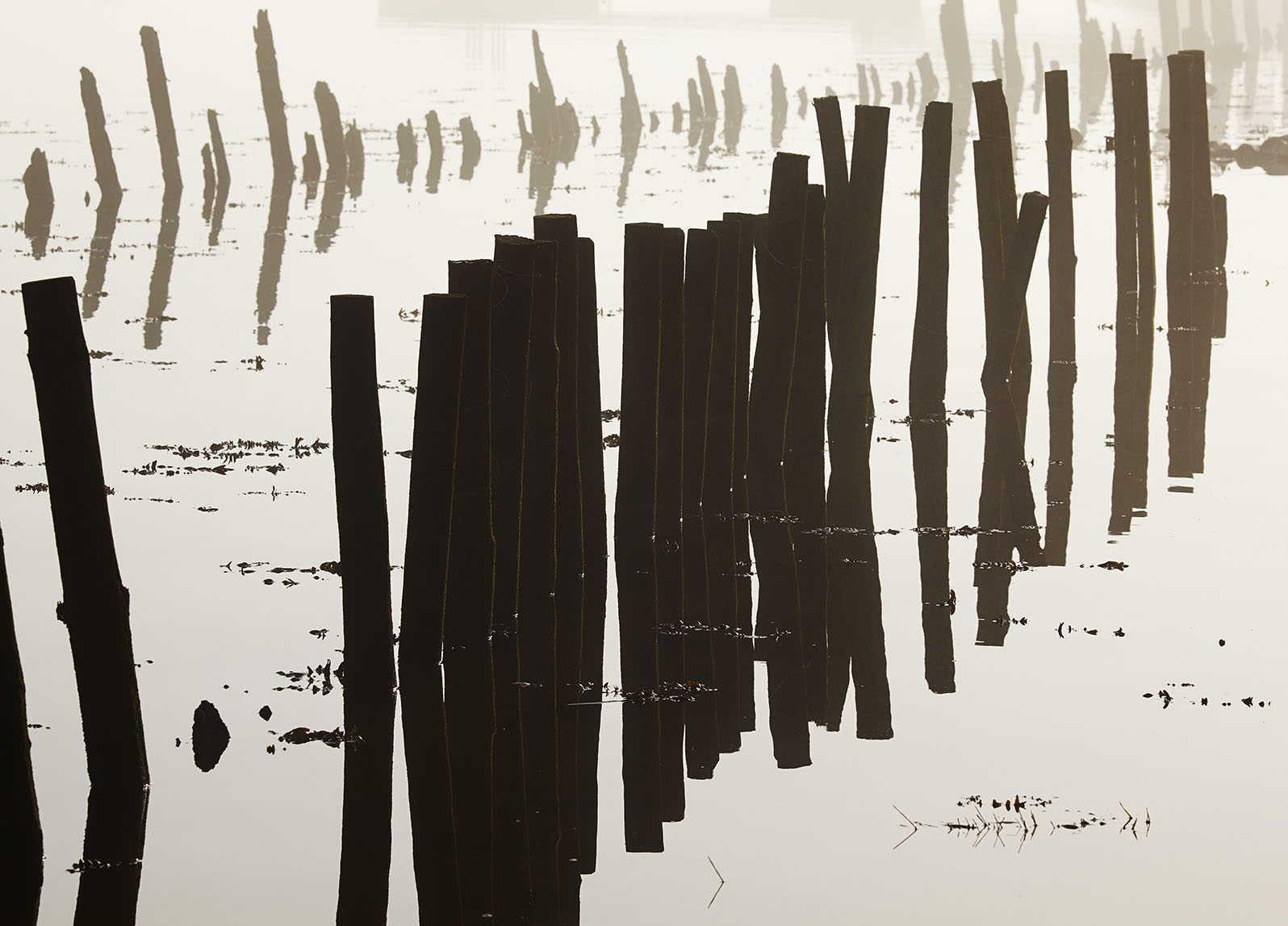 Harbour posts in Fog print; Long-lost Harbour