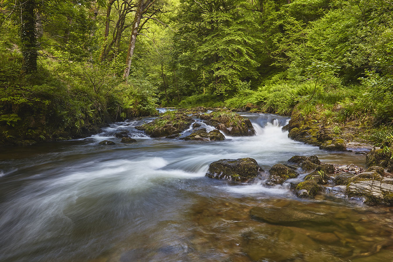 Woodland stream on Exmoor print; Verdant Forest River