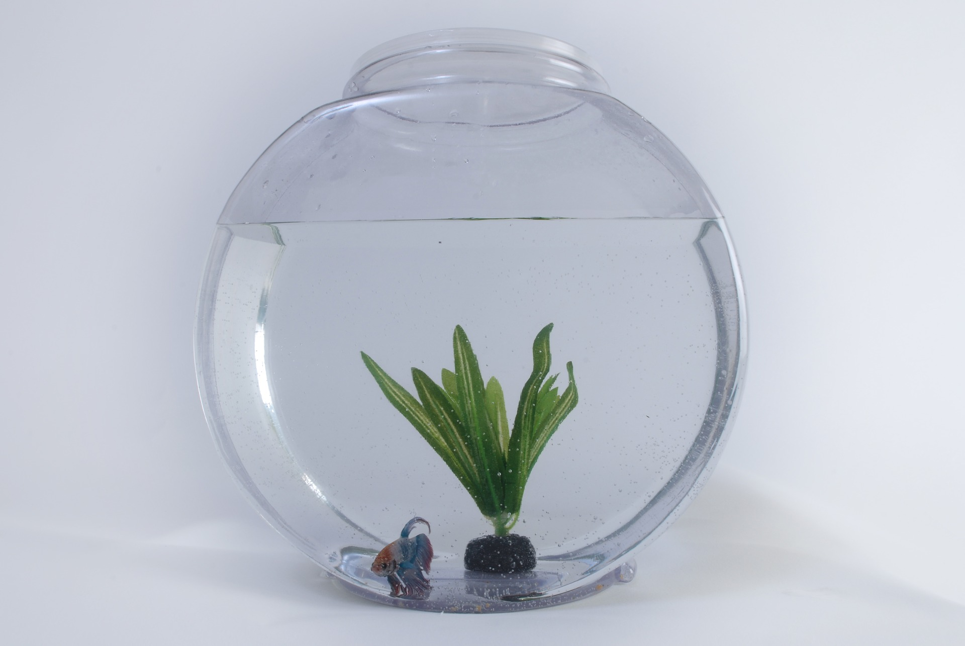 best fish tank plants aquatical