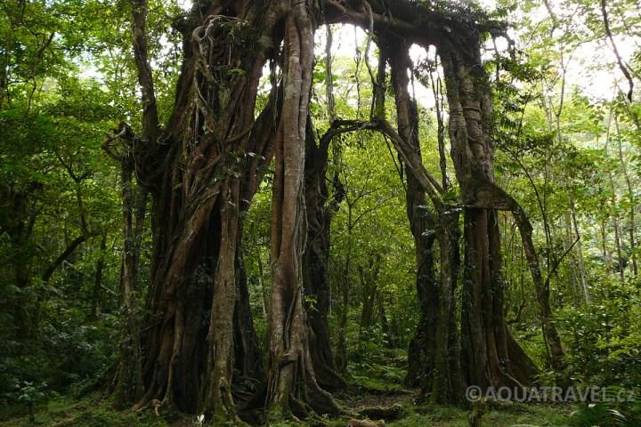 Pralesní velikán v Bedugulu na Bali