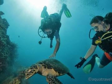 Želva s potápěči