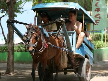 Trawangan koňmo