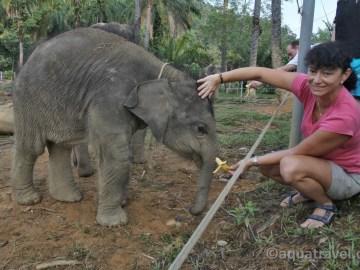 Krmení sloních mláďat v Tangkahanu