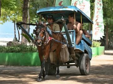 Vyjížďka s koníkem na ostrově Trawangan před cestou na ostrov Bali.