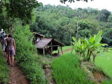 Bangle eko-hospodářství