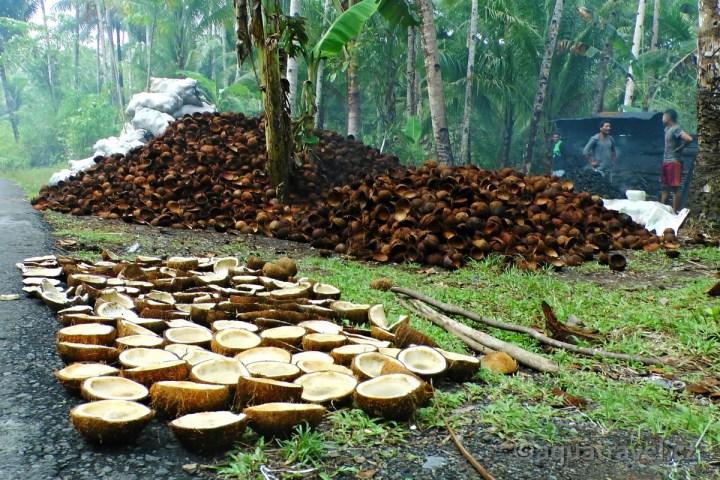 Zpracování kokosů