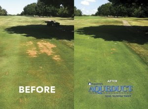 Before and After. Aqueduct, Rapid Recovery Soil Surfactant for Localized Dry Spot