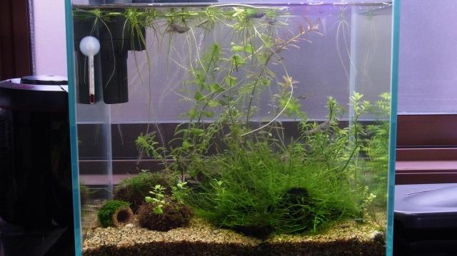 水草が伸び放題の30cm水槽