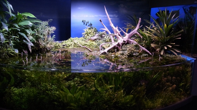 扇形の水草水槽
