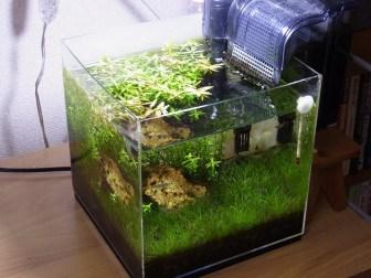 伸びることはいいことだ…順調に成長する水草のトリミング