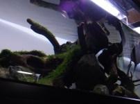 亀のレイアウト水槽飼育 アクアリウムとの融合