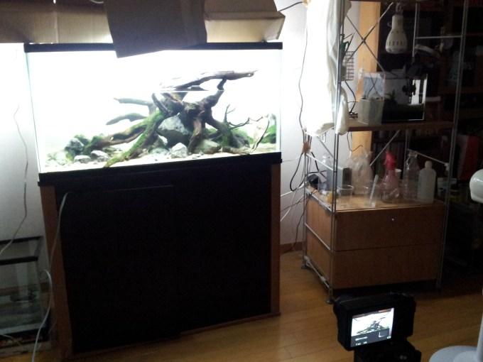 90cm亀レイアウト水槽の写真撮影