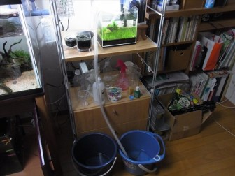 そろそろ夏本番…小型水槽は水換え頻度を上げて凌ぐ…!
