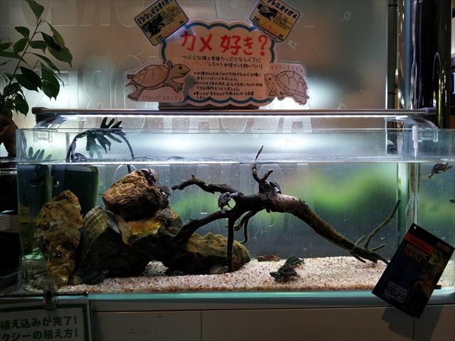 アクアフォレストの亀水槽