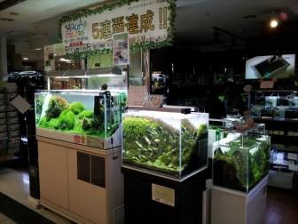 東京のアクアショップ巡り!キレイな水槽がいっぱい!