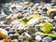 ミナミヌマエビの特徴と飼い方-繁殖が容易なアクアリウムの人気者
