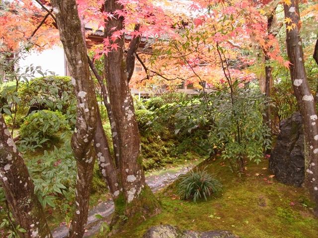 鈴虫寺の庭園