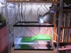 亀の飼い方・飼育方法-水槽から紫外線・ろ過まで完全まとめ