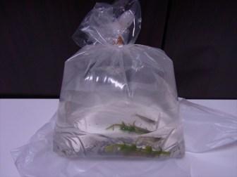 生体導入!熱帯魚やエビの水合わせ&トリートメントの方法