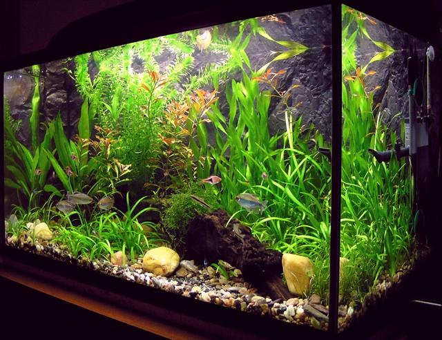 水草と熱帯魚水槽のアクアリウム