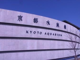 京都市の「京都水族館」行ったよ!展示水槽のレイアウトが超綺麗