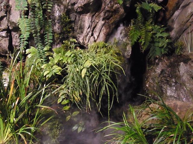 オオサンショウウオ水槽の水上部