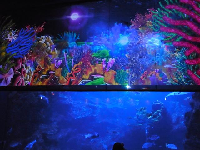 京都水族館のプロジェクションマッピング