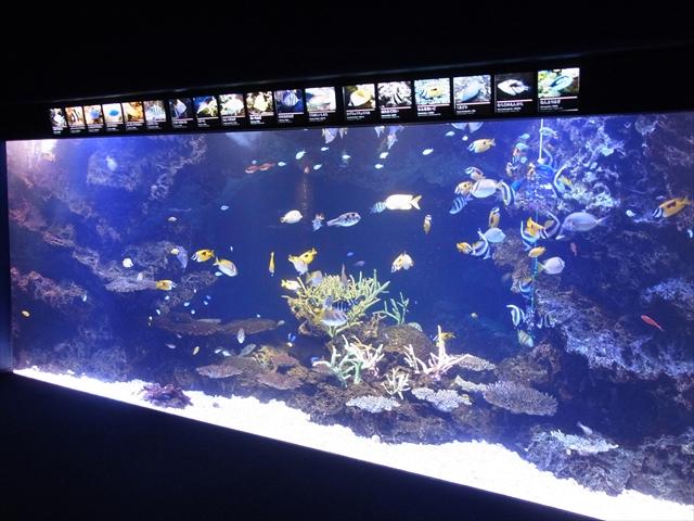 京都水族館「さんごの海」