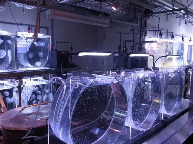 実験室風のバックヤード