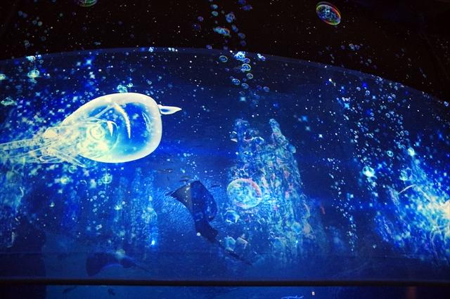新江ノ島水族館 ナイトアクアリウム_045
