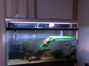 ミズガメ飼育に!浮島(フロート)タイプの亀用の陸地の作り方