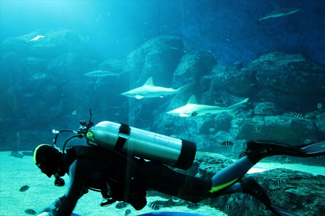 アクアリウムの掃除ー水族館のダイバー(aquarium diver)