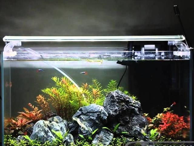 アクアリウム用の水槽ライト・照明の選び方