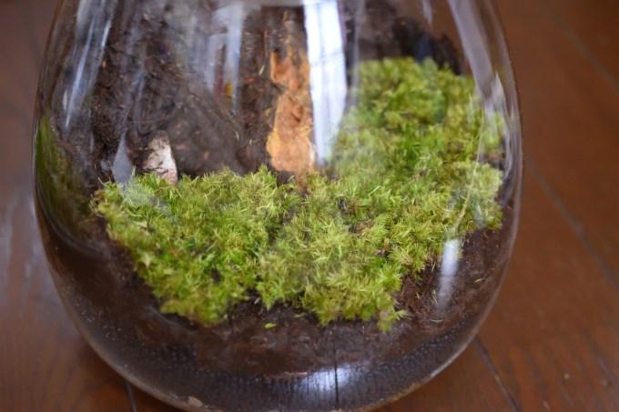 苔テラリウムの自作 造形君の上に苔を貼り付ける
