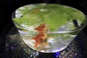 ボトルアクアリウムにおすすめの丈夫な熱帯魚・エビ・貝 10種まとめ