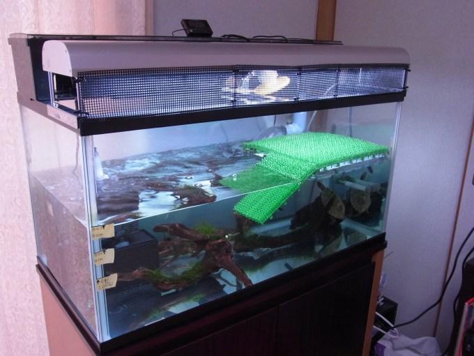 ジェックス タイマーサーモを設置した水棲亀(ニホンイシガメ)の飼育環境